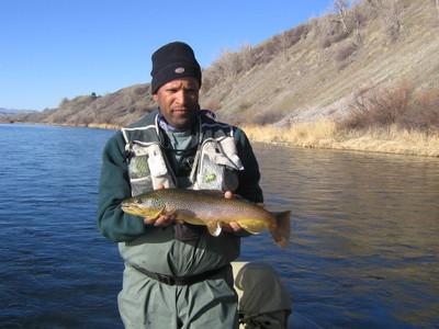 Bighorn_montana_07_098