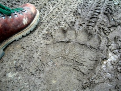 Grizzlyprint_3