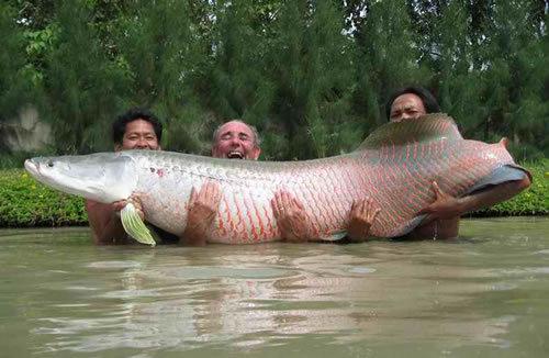 Giantfish