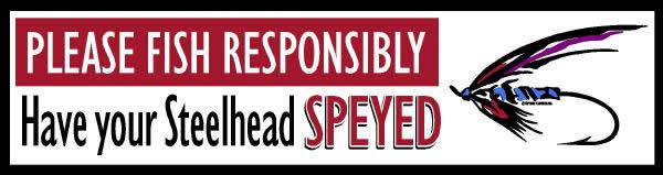 Speyed