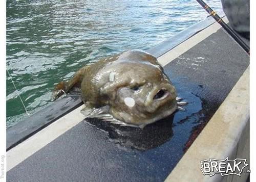 Jabba_fish