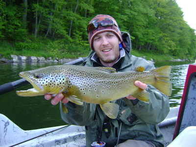 Brown_trout_2