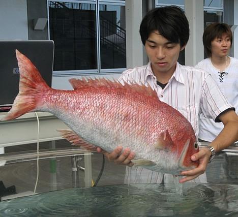 Robotic_fish