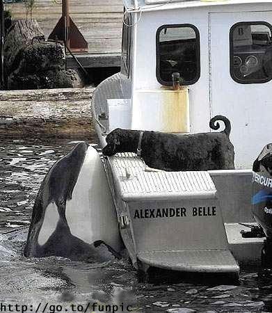 Dog_kisses_killer_whale