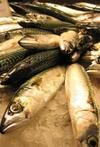 Fish20market