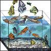 Tfishmoney